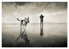 Crosby022 (herb10660) Tags: bw dog white seascape black film wow delta3200 crosby bwdreams heliar15mm