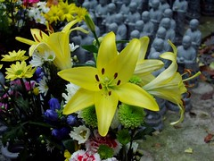 mouring the unborn babies.... (michenv) Tags: 2003 flowers flower yellow japan digital temple asia lily kamakura michelle olympus  nippon digitalcamera  orient kanagawa   camedia nihon digitalphotos hasedera digitalphotography olympuscamedia camediaseries       hasederatemple   olympusdigital flowersinvases olympusc50z michenv olympusx2 michenv2003 removedfrominmemoriampleaserereadtherules kamakuratemple