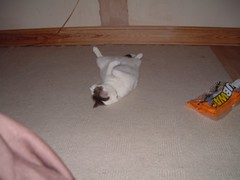 DSCF0041 (judey) Tags: cats twinkle