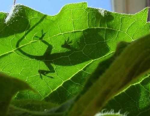 Shadow of Lizard