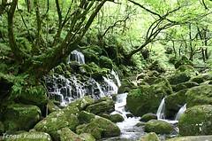 Moto Taki, Akita #01 (Mihoko Ozaki) Tags: green nature water canon eos falls days