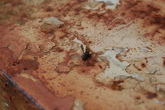 Rust (Aaron Fredericy) Tags: red metal bug fly wings rust paint bugs chip rusting oxidize