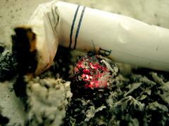 Cigarro (Guillermo Salinas) Tags: chile santiago macro art belmont guillermo salinas ceniza cigarro cigarrillo chinos filtro fe120
