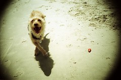 doggy (omrip) Tags: sea dog pet topv111 tel aviv omri peled 2pair