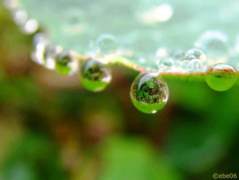 Perlas preciosas