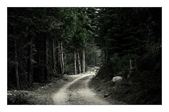 the way (parade in the sky) Tags: road trees mountains nature pine outdoors woods rocks path shortcut dirt pinecrest thelair
