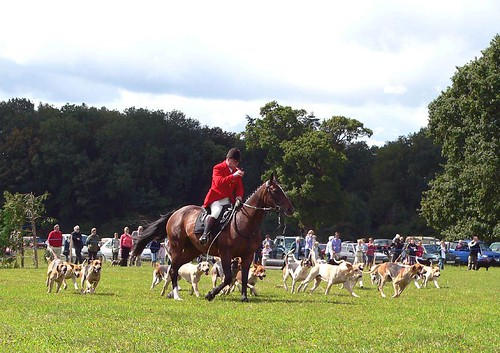 Quantock Staghounds in the Ring