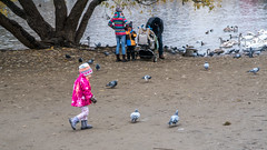 Chasing Birds (ralfkai41) Tags: jagen fur tauben doves child vögel birds chasing outdoor spielen kind spas playing