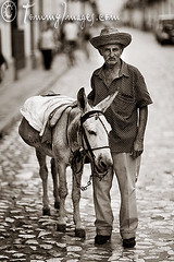 Cuban man and his donkey in Trinidad (tommyimages_com) Tags: male ass latinamerica hat vertical rustic cuba donkey oldman burro trinidad duotone dailylife cuban timeless sanctispiritus sepiatoned latinamerican blurrybackground juanvaldez guajiro travelphotos cobblestonestreet spanishspeakingcountries sanctispritus sanctispritus