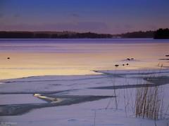Dreaming (♥ B i b b i ♥) Tags: winter lake snow ice birds evening is vinter sweden surreal explore sverige magical snö 2007 icefloe mälaren hässelby fåglar magisk sjö lakemälaren interestingness10 kväll hässelbystrand supershot i500 magicalevening isflak impressedbeauty ultimateshot magiskkväll explore11mar07