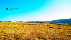Mehmet Beyli (Beylik ) Havullu Gerede (Halil Bulut) Tags: türkiye tem bolu köy manzara yayla doğa viyadük güz gerede mandıra havullu beylik ormanlar şaba mehmetbeyli anadoluotoyolu asımçavuşoğlu beylikmehmetbeylihavullugeredeboluköyyaylaşabamandıramanzaragüzbalyabuğdaybaşak