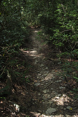 sunny path (Molly Des Jardin) Tags: park trees light shadow plants usa sun green leaves forest rocks state pennsylvania earth path sunny dirt dappled 2014 undergrowth susquehannock drumore 43215mm