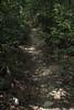 sunny path (Molly Des Jardin) Tags: park trees light shadow plants usa sun green leaves forest rocks state pennsylvania earth path sunny dirt dappled 2014 undergrowth susquehannock drumore 43215mm