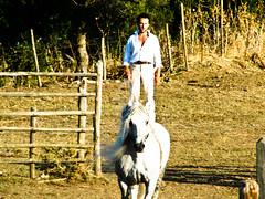 Circus (StefoF) Tags: horses horse pool cowboys lago cow cowboy mucca cavalli cavallo lazio tarquinia maremma laghetto vacca vulci transumanza montaltodicastro vaccamaremmana transumando laghettodivulci