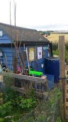 The Lotty (smerryweather) Tags: sheds allotments garden diy roof terrace veg grow your own flowers plants soil night sky self sufficiency food