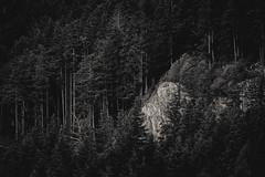 Ketchikan (JM L) Tags: trees alaska ketchikan adobecameraraw