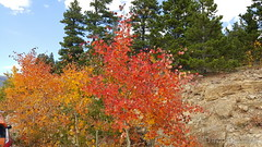 September 27, 2015 - Fall colors along the Peak to Peak Highway.  (David Canfield)