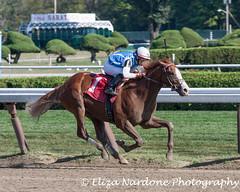Rafting (Eliza Nardone Photography, LLC) Tags: new york horse racetrack saratoga racing races nyra