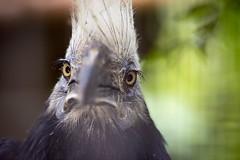 Bird Avifauna (siebe ) Tags: holland bird netherlands dutch animal zoo nederland thenetherlands vogel avifauna dierentuin alphenaandenrijn 2015 vogelpark siebebaardafotografie