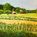 "Across the Field - 30"" x 40"" - Oil  - Sold"