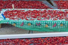 Calabria (Morena AN Massacesi) Tags: peperoncini calabria rizzuto