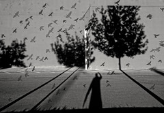 the unanticipated portal (** RCB **) Tags: trees bw flying long shadows flock nb dreaming dreams sacramento selfie sacramentovalley longshadows hss sliderssunday happysliderssunday flockofbirdsflyingoverwesselburenbydirkingofranke2011cc30by