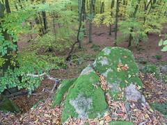 R0023780 (joachimelbing) Tags: adlerhorst oberlemp