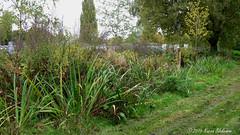 October 23rd, 2015 Edge of Hills Meadow Car Park (1) (karenblakeman) Tags: uk trees plants october carpark caversham 2015 hillsmeadow 2015pad