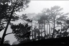 Heavy fog morning #fog #foggy #fogphotography #fogphotoshoot #bnw #bw #insta_bw #bws_worldwide #bw_shotz #monochrome #monoart #insta #auckland #visitauckland #newzealand #marvelshots #fogmorning #nature #trees #wonderfoulplace #landscape_lovers #landscape (dorauu0000) Tags: trees bw square squareformat bwphotography amazingshots instagramapp uploaded:by=instagram