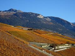 Automne 2015_7 (JMVerco) Tags: autumn fall automne landscape switzerland vineyard suisse paysage autunno vignoble vigne paesaggio valais vigna swizzera flickrchallengegroup sailsevenseas