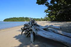Garners Beach (166) Driftwood (sixdos) Tags: sea sky texture canon landscape sand driftwood queensland missionbeach tropicalnorthqueensland farnorthqueensland garnersbeach canoneos7dmarkii missionbreaze