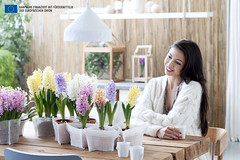 Die Hyazinthe ist Pflanze des Monats Dezember 2015 (Pflanzenfreude.de) Tags: zimmerpflanze hyazinthe pflanzedesmonats