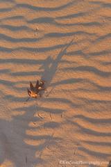 Lake Michigan ... 'beep beep' (Ken Scott) Tags: autumn usa fall beach leaf sand december michigan lakemichigan greatlakes shadowplay hdr roadrunner freshwater voted leelanau 2015 45thparallel sbdnl sleepingbeardunenationallakeshore mostbeautifulplaceinamerica