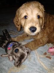 honeys-little-boy-oliver-loves-his-new-toys_19032151468_o