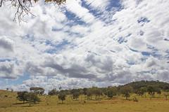 cerrado landscape (Andre Zuin) Tags: trip travel trees brazil sky naturaleza nature brasil clouds landscapes natureza paisagem nuvens cerrado arvores ceu paisagens goias