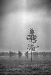 An ancient feeling (Italian Film Photography) Tags: fomapan fujifilm gw690 analogica biancoenero blackandwhite film pellicola analogue 120 mediumformat hc110 wineyard vigneti fog mist weather
