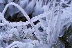 Earning for cold fingers (Ernst_P.) Tags: 135mm aut eis enterbach inzing österreich reif samyang schnee tirol walimex winter tyrol austria autriche frost kristall eiskristall ice hielo nieve snow neve