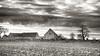 Square Farmstead (enneafive) Tags: farmstead squarefarm monochrome heks limburg belgie belgium olympus omd em5 fiels earth trees light agriculture monnikenhof landscape vlaamslandschap