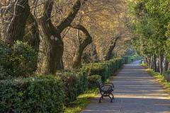 sul viale del lungomare (gianmaria.colognese) Tags: verde lungomare lido venezia persona piante alberi luce mattino panchina passeggiata