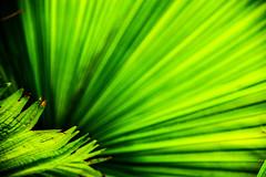 green is spreading [Explore] (LiterallyPhotography) Tags: farn fächer natur wilhelma stuttgart zoo tierpark badenwürttemberg