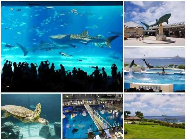 沖繩美麗海水族館.海洋博紀念公園.海豚秀.親子旅遊page