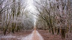 Winter walk .. (Alex Verweij) Tags: winter almere lumiere lumierepark filmwijk brug wandelen alexverweij canon 5d 28mm f40 path voetpad pad tree trees boom bomen park holland