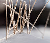 winter's skinny fingers (marianna_a.) Tags: winter ice grass stem frost snow light macro mariannaarmata bokeh warm cold frozen lines