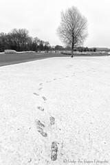 Footsteps in the snow. (PvRFotografie) Tags: nederland holland rotterdam rotterdamzuid rotterdamcharlois zuiderpark nature natuur snow sneeuw zwartwit blackandwhite blackwhite monochrome sonyilca99m2 20mm sony20mmf28 landscape landschap scenery