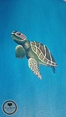 Schildkröte4 (Sandys.PiecesOfArt.) Tags: schildkröte malen gemalt gezeichnet zeichnen drawing turtle undersea blue green animal acryl acrylic canvas acrylmalerei malerei illustration auf leinwand sandyspiecesofart sandys piecesofart
