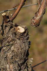 beschnitten (doerrebachtaler) Tags: langenlonsheim guldental weinberg guldentalerkrönchen weinwanderweg