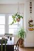 Some Easy Tips on How to Hang Plant Pots Inside (sundari_nashita) Tags: ceilingjoist flower flowerpots floweringhouseplants hangingbaskets pots temperaturefluctuations wallstud