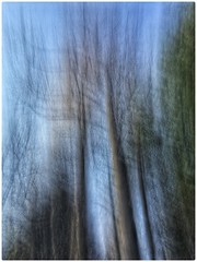 Untitled (GR167) Tags: verticalpan northcarolina nc slowshutter iphoneography iphoneart autumn fall