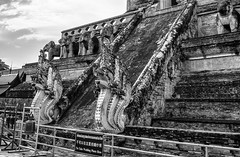 The Naga Staircase at Wat Chedi Luang (Anoop Negi) Tags: wat chedi luang chiangmai thailand black white monochrome monument architecture outdoor naga head nagas serpent stair case unesco photo photography anoop negi ezee123