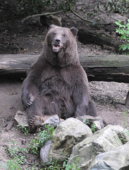 Bear Forest Ouwehands Dierenpark (lesbaer4) Tags: zoo rhenen ouwehandsdierenpark ouwehandszoo